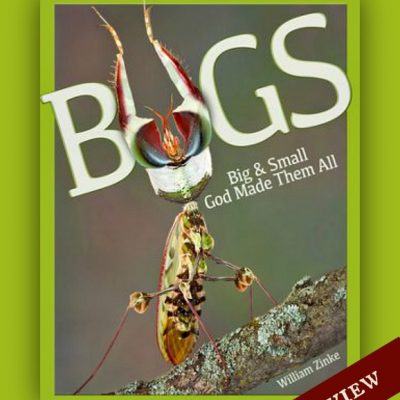 Bugs: Big and Small God Made Them All by William Zinke {Review}