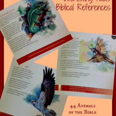 44 Animals of the Bible by Nancy Pelander Johnson {Review}